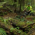 Climbing through thick old-growth forest.- Mount Fromme Mountain Bike Trails: No Quarter + Dreamweaver Loop
