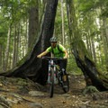 Wide bars make for a tight fit.- Mount Fromme Mountain Bike Trails: No Quarter + Dreamweaver Loop