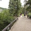 Bear Lake Trail.- Bear Lake Loop Hike