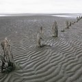 The remains of some posts toward the end of the beach. - Iona Beach