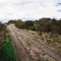 A path located a bit inland. - Iona Beach