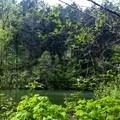 Cronemiller Lake.- Peavy Arboretum