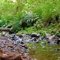 Calloway Creek.- Peavy Arboretum