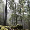 Views of the old-growth forest.- Orcas Island: Cold Springs Trail to Mount Constitution Summit