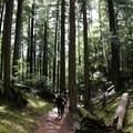 Lush surrounding along the way.- Orcas Island: Cold Springs Trail to Mount Constitution Summit