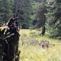 A deer in the distance.- Orcas Island: Cold Springs Trail to Mount Constitution Summit