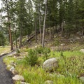 Pathway to Amphitheater and Fall River at Aspenglen Campground.- Aspenglen Campground