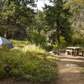 Walk-in campsites along Fall River at Aspenglen Campground.- Aspenglen Campground