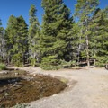 Sprague Lake day use picnic area.- Sprague Lake Loop Hike