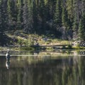 Angler on Sprague Lake.- Sprague Lake Loop Hike