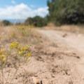 Wildflowers and brush are abundant here.- 18 Road Mountain Bike Trails: Kessel Run