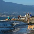 Dog beach.- Spanish Banks Beach