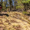 This area is dog friendly, but there are few water sources along the way.- One Mile Lake Mountain Bike Trails: Lumpy's Epic