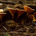 Many varieties of mushrooms can be found here.- Shannon Falls Provincial Park