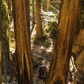 The trail plateaus before one last push to the top.- Shannon Falls Provincial Park