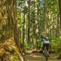 The loop starts off gently.- Mount Seymour Trails: Lower Mountain Loop
