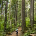 Rolling through the old-growth forest.- Mount Seymour Trails: Lower Mountain Loop
