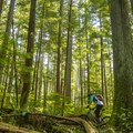 Starting to climb High School League.- Mount Seymour Trails: Lower Mountain Loop
