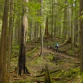 Winding through the woods.- Mount Seymour Trails: Lower Mountain Loop