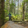Old downed trees have become part of the trail. - Mount Seymour Trails: Lower Mountain Loop