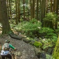 Dropping into Badden Powell.- Mount Seymour Trails: Lower Mountain Loop