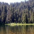 Crabtree Lake is buried in the forest, guarded by thick trees.- Crabtree Valley Hike