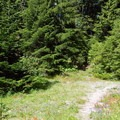 The trail alternates from sunny clearings to dark woods.- Crabtree Valley Hike