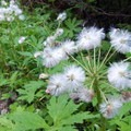 Wildflowers are abundant in the clearings along the trail.- Crabtree Valley Hike