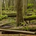 Old school water hazards.- Mount Seymour Trails: Lower Mountain Loop