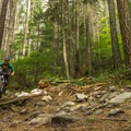 C Buster is bumpy but flowy.- Mount Seymour Trails: Lower Mountain Loop