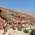 Sharing the trail with the pack horses run by the Havasupai Tribal members.- Mooney + Beaver Falls Hike from Supai