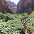 There are foot bridges along the trail.- Mooney + Beaver Falls Hike from Supai