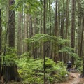 The air is fresh and sweet on Mount Fromme.- Mount Fromme Trails: Expresso + Baden Powell