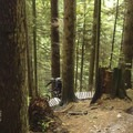 This trail has burms, bumps and boards.- Mount Fromme Trails: Expresso + Baden Powell