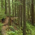 A few small climbs on the Baden Powell Trail.- Mount Fromme Trails: Expresso + Baden Powell