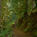 The lush forest surrounds the trail out to Fall Creek Falls.- Fall Creek Falls National Recreation Trail