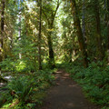 The trail follows Fall Creek in the Umpqua National Forest.- Fall Creek Falls National Recreation Trail
