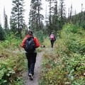 Weaving through some dense forest at the start of the trail. - Poland Lake Hike