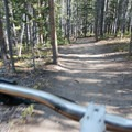 Wide and open trail running through the trees is typical for the Bakers Tank Trail.- Bakers Tank Mountain Bike Ride