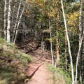 Fast descents on the Bakers Tank Trail.- Bakers Tank Mountain Bike Ride
