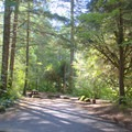 Typical campsite shaded by tall trees in Boulder Flat Campground.- Boulder Flat Campground