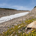 Wildflowers by the glacier.- Saint Mary's Glacier + Saint Mary's Lake