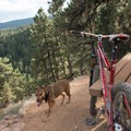 There are a few places to rest along the way.- Betasso Preserve Loop Mountain Bike Ride