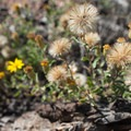 Late fall brings the last wildflowers to Buffalo Creek.- Sandy Wash Mountain Bike Ride