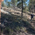 Ponderosa pines that escaped the forest fire here.- Sandy Wash Mountain Bike Ride
