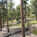Riding the Magnolia Loop.- West Magnolia Mountain Bike Loop