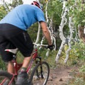 Aspens flank the end of the trail.- West Magnolia Mountain Bike Loop