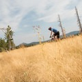The last part of the loop leads though a golden meadow.- West Magnolia Mountain Bike Loop