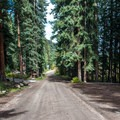 Road on the forested west loop of the campground.- Yeoman Park Campground