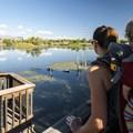 Wally Toevs Pond, Walden Ponds.- Walden Ponds Wildlife Habitat, Wally Toevs Pond